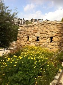 Israel Photo 2